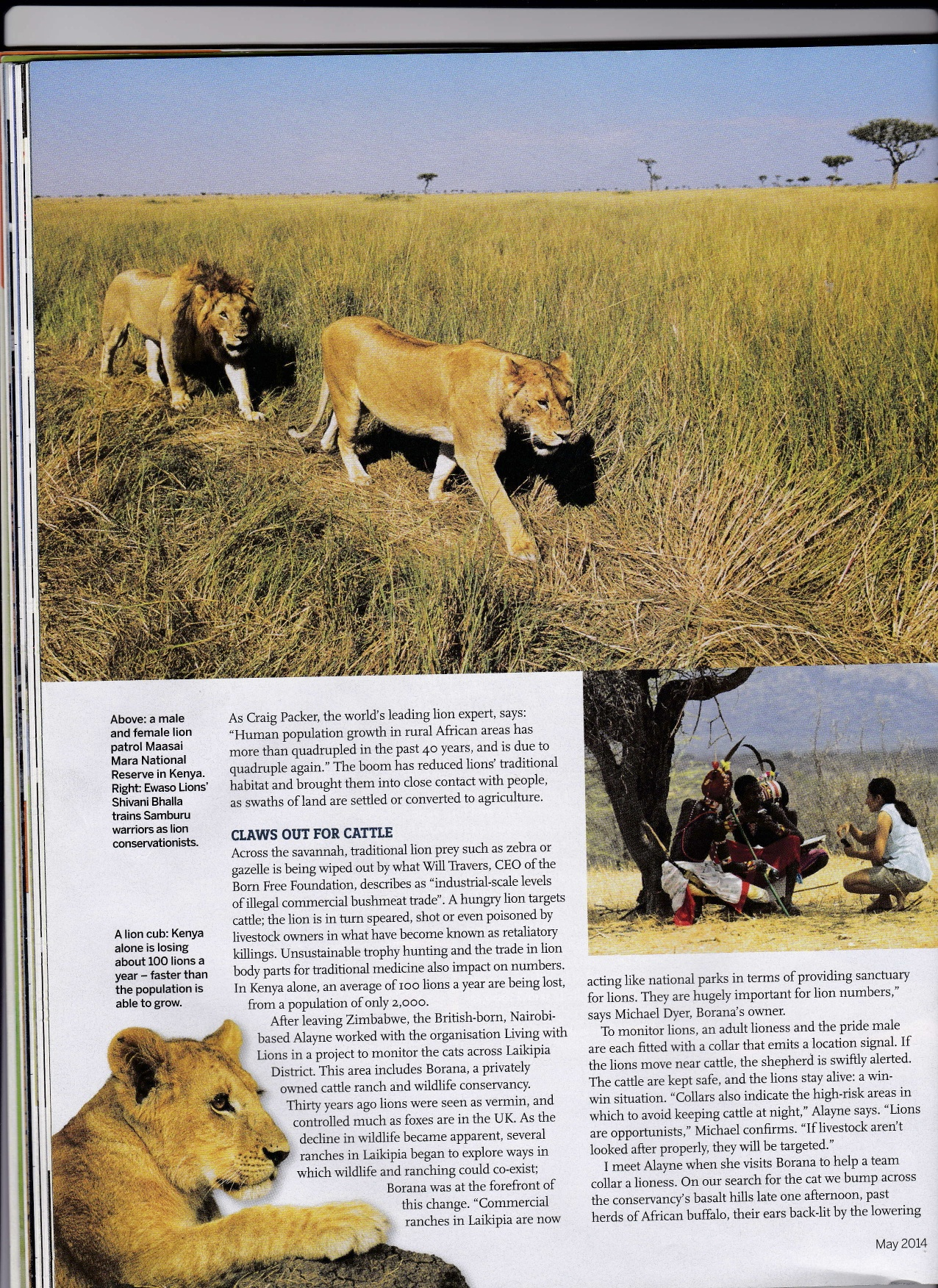 BBC Wildlife LIONS Pg 2 jpeg