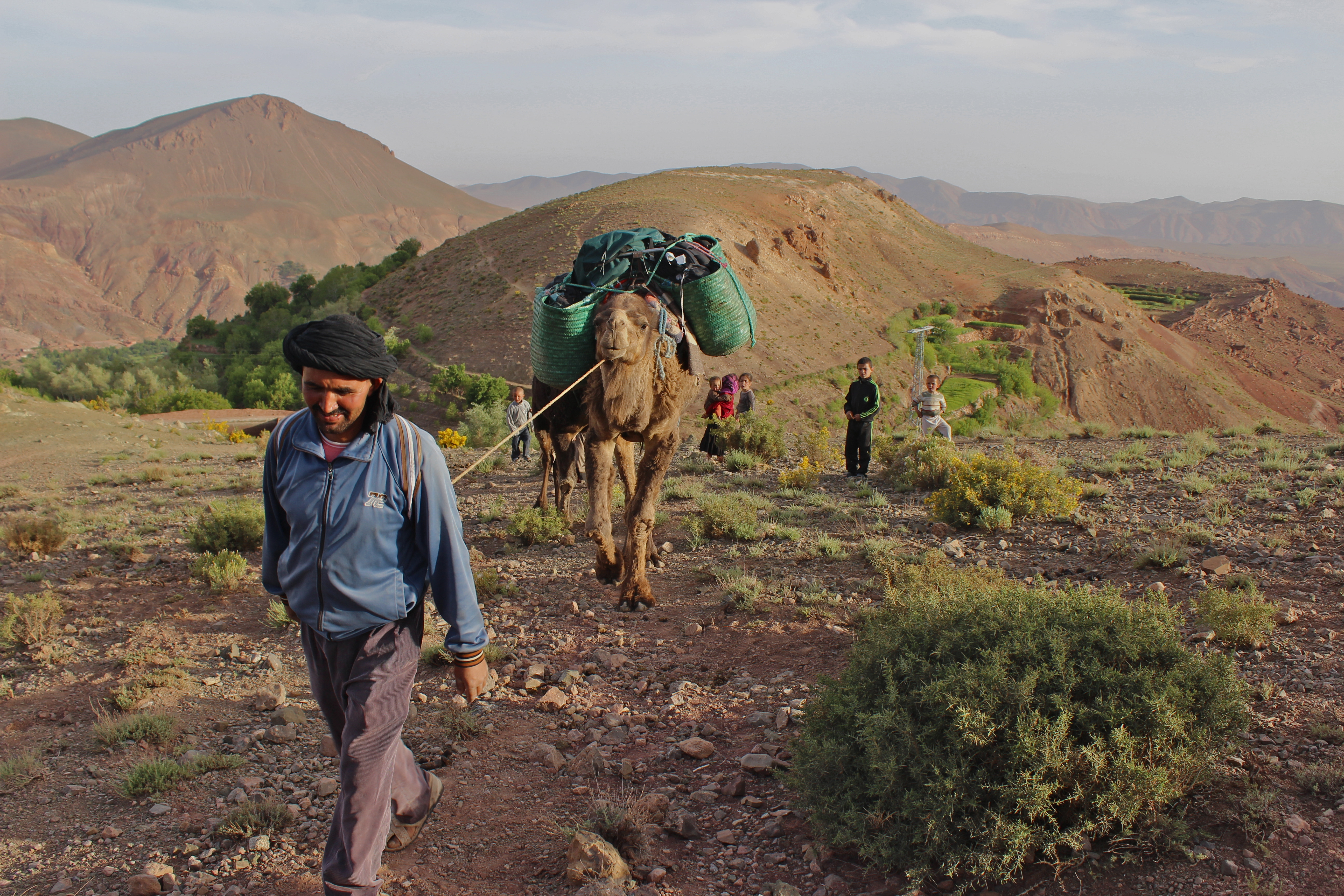 Brahim leads the camels out of the Valley of Roses, and into the M'goun massif, High Atlas mountains, Morocco