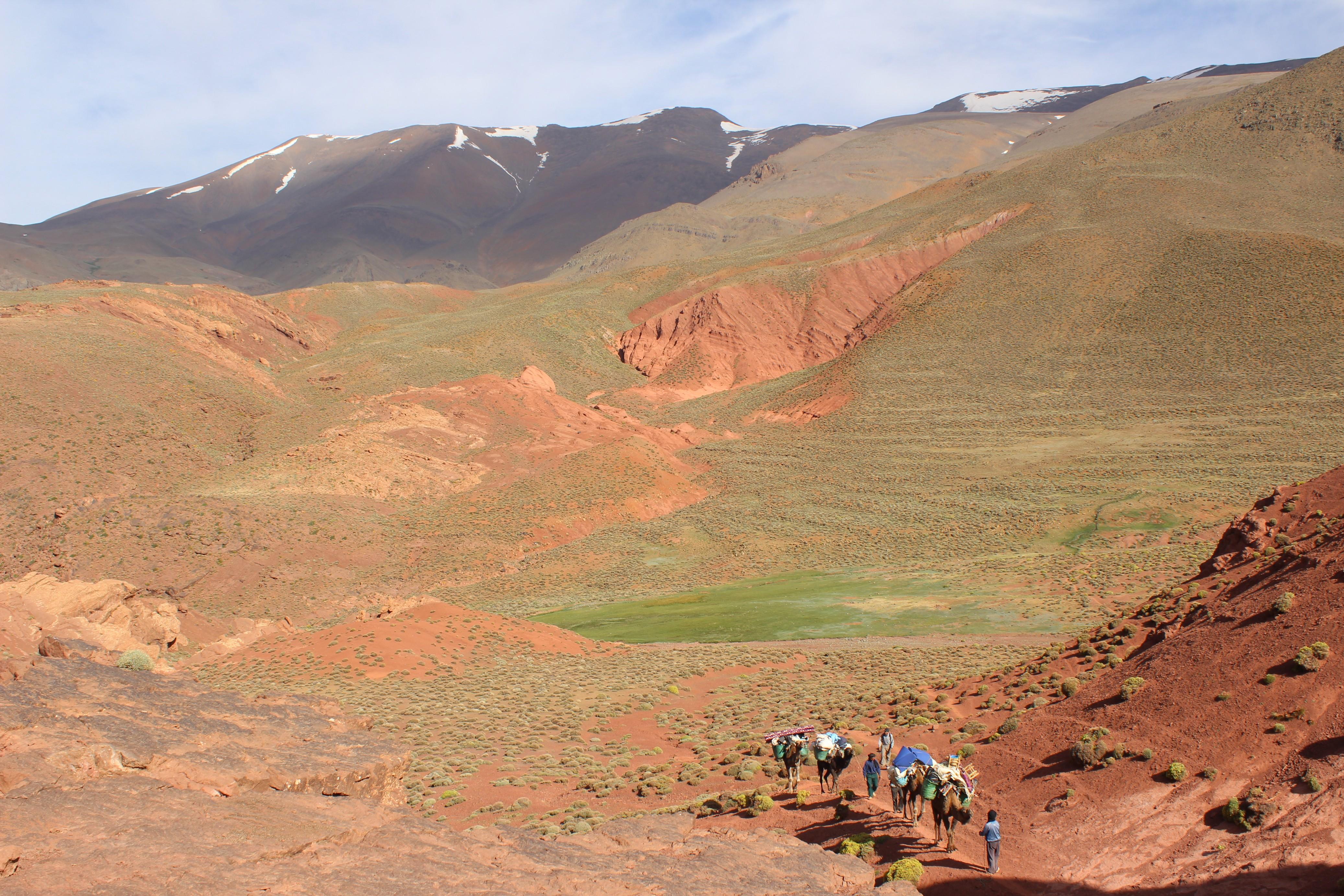Camel train on lower slopes of Jebel M'goun
